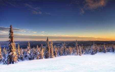 Картинки Norway, Норвегия, зима, ели