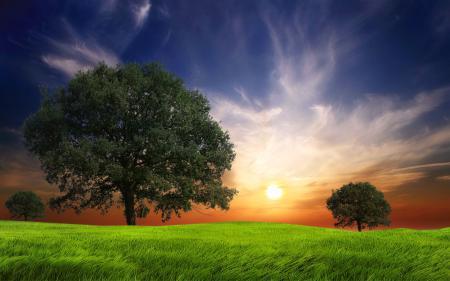 Фото Summer Sun, Trees, Дерево, Трава