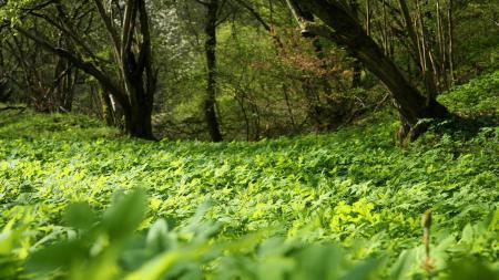 Обои Поляна, трава, зелень, лето