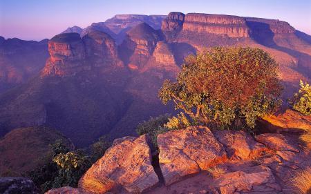 Фото Горы, ЮАР, одинокий куст