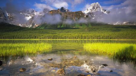 Фото горы, лес, озеро, трава