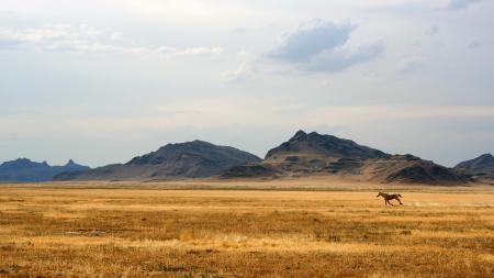 Картинки поле, конь, бег