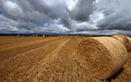 Фото поле, убранное, конец лета, жатва