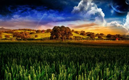 Фото Andrea Andrade, дерево, поле, небо