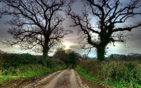 Картинки дорога, деревья, природа, пейзаж