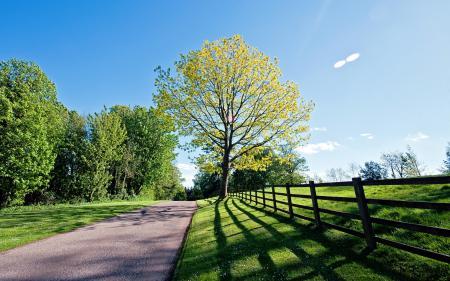 Обои дорога, забор, дерево, пейзаж