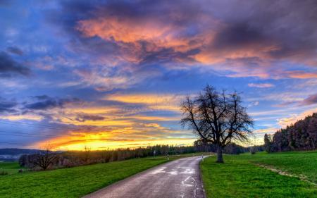 Картинки закат, дорога, дерево, пейзаж