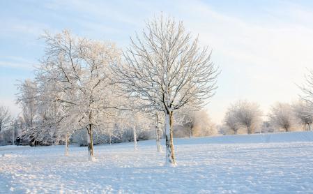 Заставки зима, мороз, иней, снег