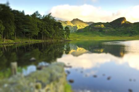 Заставки пейзажи, природа, зелень, деревья