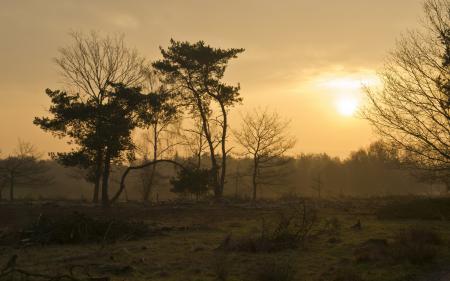Заставки закат, деревья, пейзаж