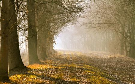 Обои утро, деревья, туман
