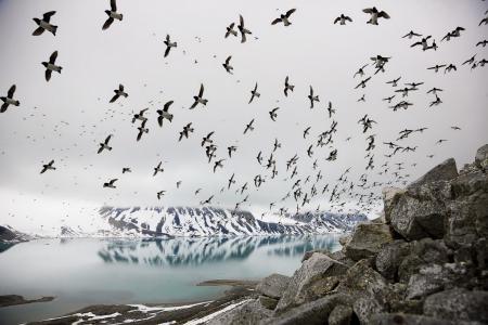 Фото птицы, море, север, пейзаж