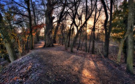 Картинки деревья, дорога, природа