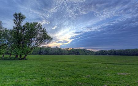 Фотографии поле, дерево, небо, пейзаж