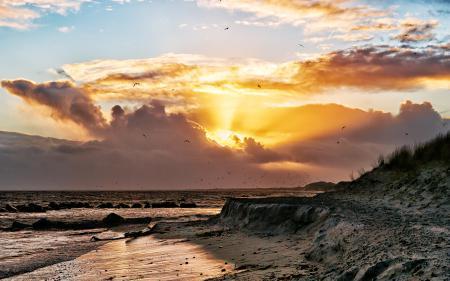 Картинки море, пляж, берег, чайки