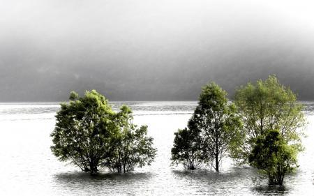 Обои река, деревья, туман, природа