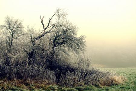 Фото утро, туман, деревья, кусты