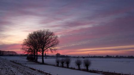 Обои закат, зима, поле, деревья