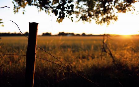Обои поле, травы, простор, столбик