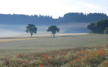 Картинки утро, туман, поле