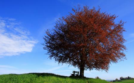 Фотографии дерево, небо, скамья, пейзаж