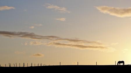Фото небо, конь, свет, минимализм