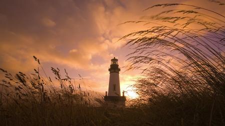 Картинки маяк, ветер, колосья