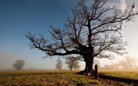 Обои утро, поле, дерево