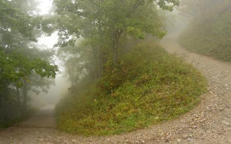 Заставки лес, холм, дорога, туман