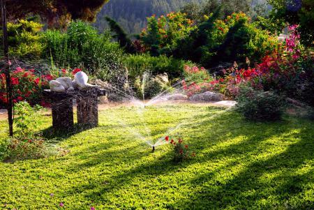 Фотографии Green garden, сад, газон, ландшафт