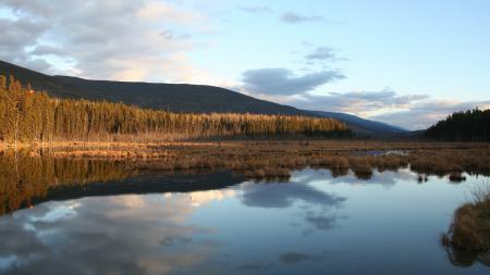 Фото пейзаж, природа, болото