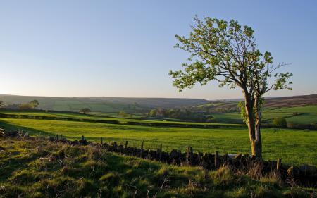 Картинки поле, дерево, забор, пейзаж