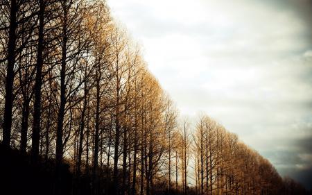 Картинки деревья, небо, свет, природа