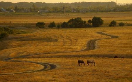 Картинки поле, дорога, кони, пейзаж