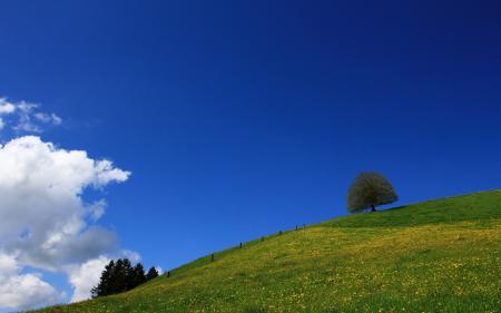 Заставки дерево, небо, лето, природа