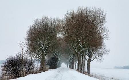 Картинки зима, дорога, деревья, снег