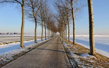 Обои дорога, зима, деревья