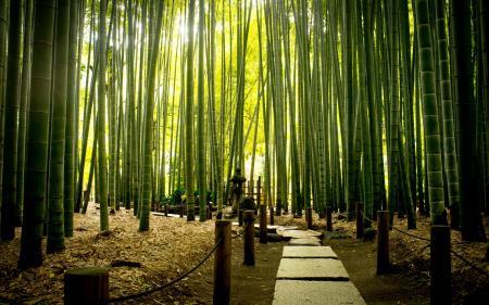 Картинки парк, дорога, бамбук