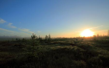 Обои утро, поле, природа, пейзаж