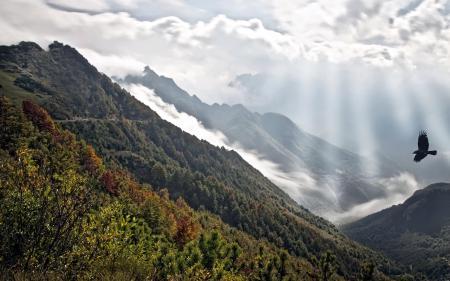 Картинки горы, птица, пейзаж
