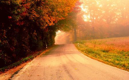 Обои осень, дорога, деревья, туман