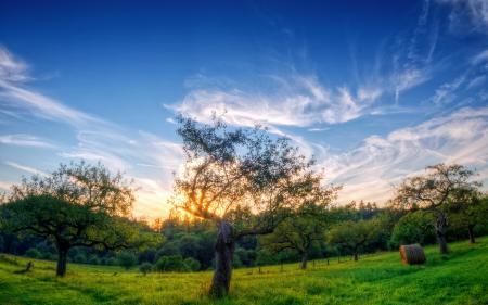 Картинки деревья, поле, лето, пейзаж