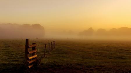 Фото поле, забор, туман, скот