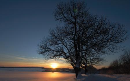 Обои закат, поле, дерево, пейзаж