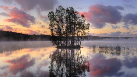 Фото обои, природа, дерево, озеро