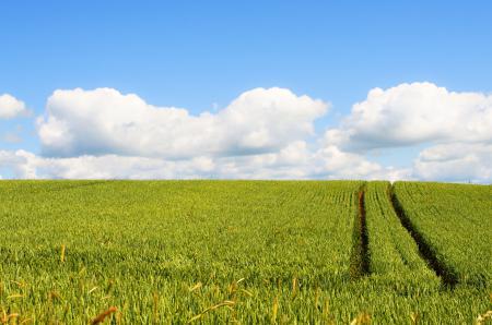 Заставки поле, дорога, небо, облака