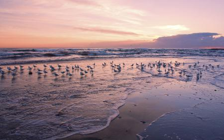 Заставки море, рассвет, чайки, волны