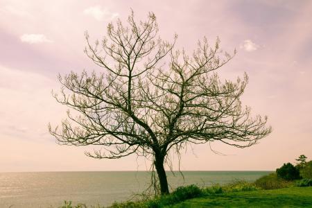 Обои дерево, море, пейзаж