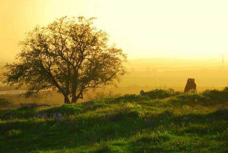Заставки утро, мгла, туман, трава