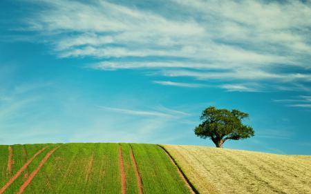 Заставки поле, дерево, лето, пейзаж